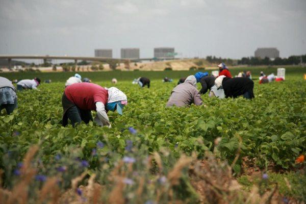 Temporary Farm Labour